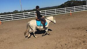 lovely pony for sale Helensburgh Wollongong Area Preview