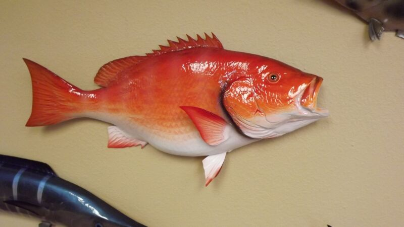 """32"""" Red Snapper Half Mount Fish Replica - 10 Business Day Production Time"""