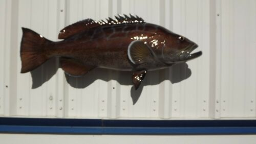 """38"""" Black Grouper Two Sided Fish Mount Replica - 10 Business Day Production Time"""