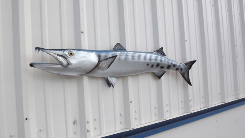"""49"""" Barracuda Half Mount Fish Replica - 10 Business Day Production Time"""