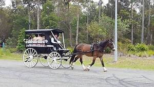 Shoalhaven Horse Drawn Carriages Nowra Hill Nowra-Bomaderry Preview