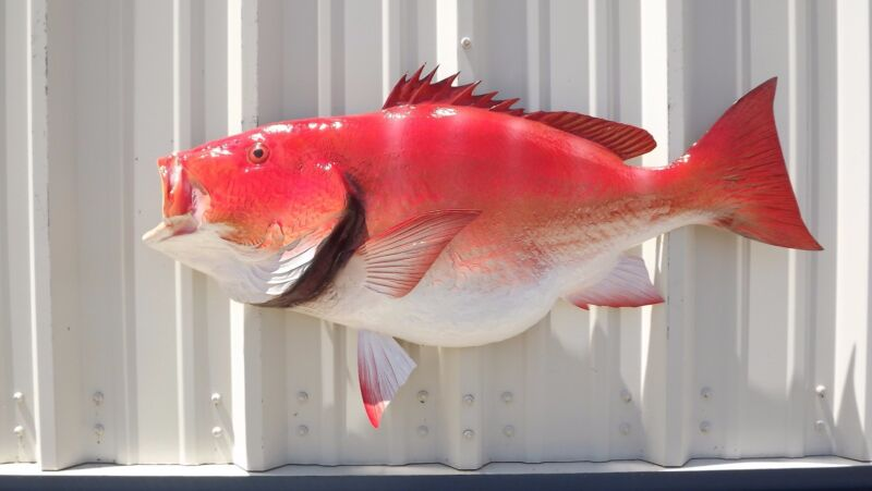 """39"""" Red Snapper Half Mount Fish Replica - 10 Business Day Production Time"""