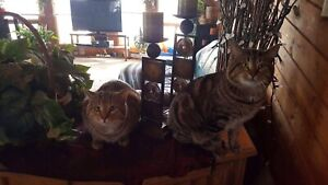 Two Affectionate Male Cats Seeking Forever Home Immediately