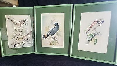 Nature Birds illustrations by Maria Angelica Moreno Kierner signed one of a kind