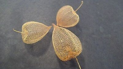 Three Dried Chinese Lantern Seed Pod Skeletons for Crafts and Arrangements - Chinese Lantern Craft
