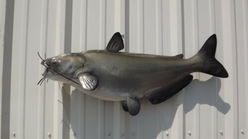 """34"""" Channel Catfish Two Sided Fish Mount Replica-10 Business Day Production Time"""