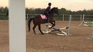 Horse for out of barn lease