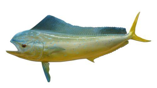 "42"" Cow Dolphin Half Fish Mount Replica (aka Mahi Mahi / Dorado) -10 Day"