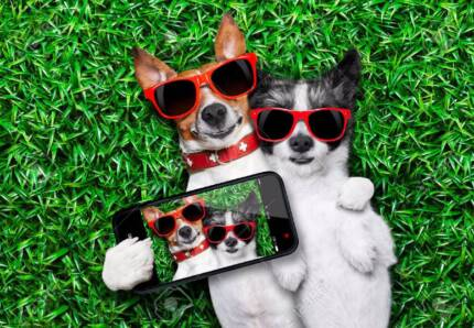 BUSINESS FOR SALE - Mobile Holiday Pet Care, Maitland