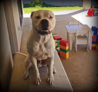 HARRY - FREE TO A GOOD HOME Maitland Maitland Area Preview