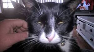 any info?lost cat Merriwa Wanneroo Area Preview