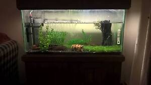 3ft Fish tank + Fish + Gear Etc Renmark Renmark Paringa Preview