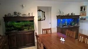 2 large aquariums with cabinets Old Reynella Morphett Vale Area Preview
