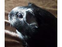 Female 6 months old Blackie
