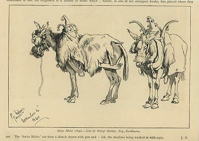 Pen /& ink drawing by Jan Jellins #343 BELGIAN SHEEPDOG  dog art print
