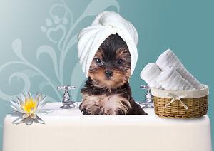 Basic Pet Grooming by Registered Vet Tech