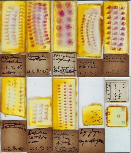 Botany Microscope Slides (E)