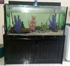 4X2 ft fish tank Alexandra Hills Redland Area Preview