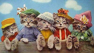 kittycatparade