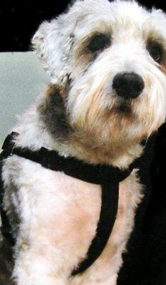 Sicherheitsgurt bis 40 kg Größe M Transportgurt Anschnallgurt Hund Reisengurt Ne