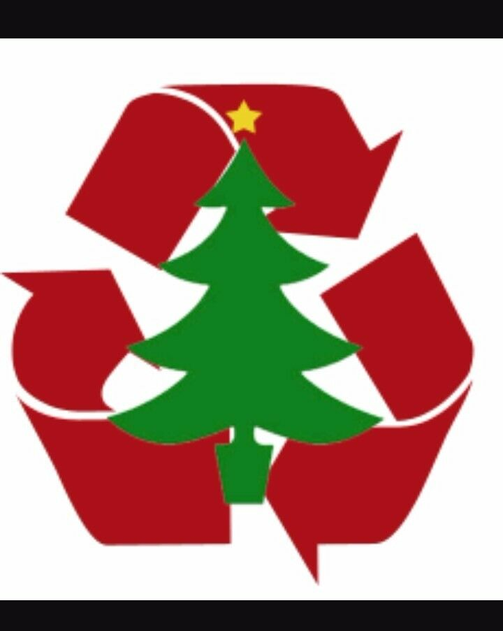 Christmas Tree Disposal.Christmas Tree Disposal Recycling From 10 Collected From