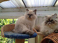 Beautiful male and female loving kittens.
