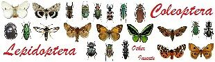 entomofauna