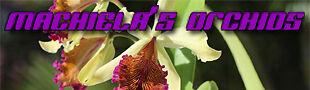 Machiela's Orchids