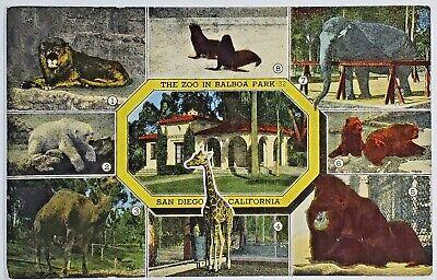c1930-45 Balboa Park Zoo San Diego CA Vintage Linen Postcard *PC0281