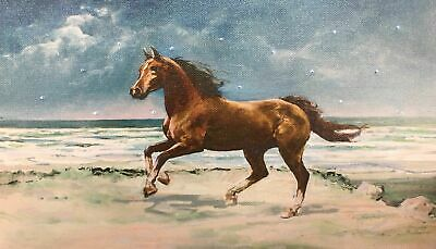 HORSE LED Light Up Lighted Canvas Painting Picture Wall Art Home Office - Light Up Horse