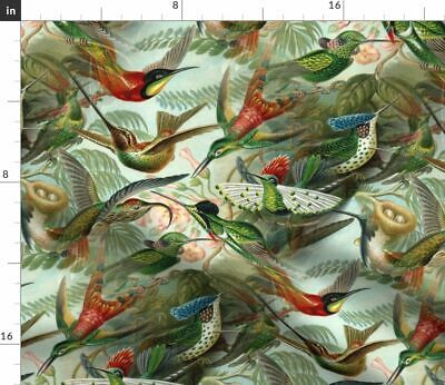 Vintage Hummingbirds Botanical Bird Antique Fabric Printed by Spoonflower BTY