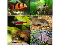 Tropical fish for sale - Please see description for species,and prices