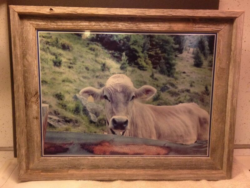 Brown swiss art, brown swiss photo, brown swiss cow, dairy cow art, cow art