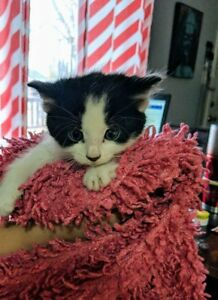 Beautiful Cuddly Babies looking for forever families
