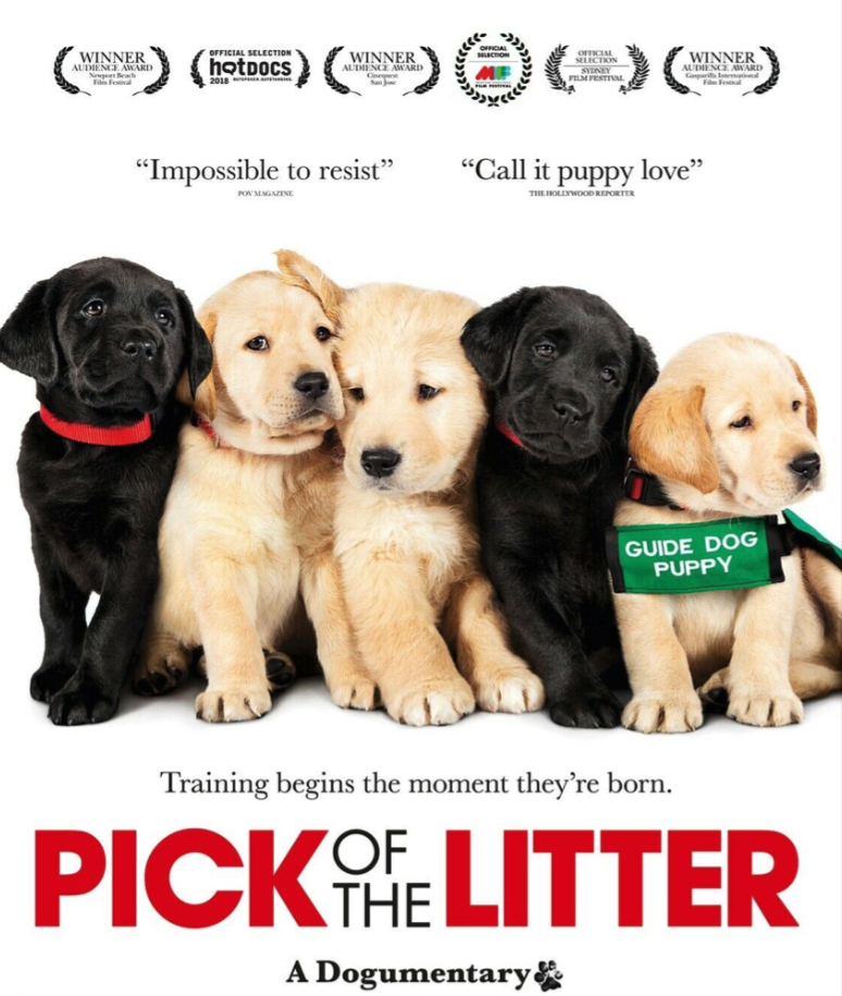 PICK OF THE LITTER DVD - - - EX LIBRARY COPY - $14.95
