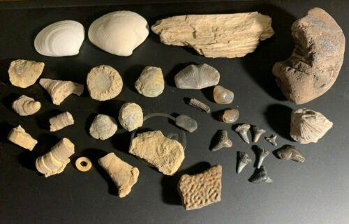 Fossil collection ray shark teeth wood whale bone turtle brachiopod coral  7 oz.