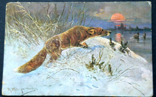 49524 Ak Hunting Hair Game fuchs IN Snow IN The Evening Sunset
