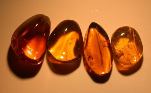 4 Pieces of Dominican Amber Fossils with Variety of Ancient Insects, 2.1 g