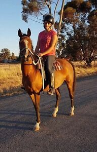 stockhorse mare Lockhart Lockhart Area Preview