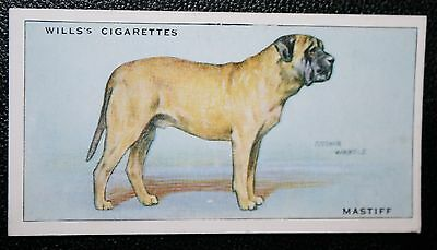 Mastiff  Original Vintage Illustrated Card # VGC