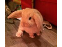 Bunnies Available Reserving