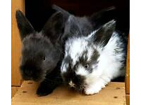 BABY BUNNIES RABBITS BLACK & BLACK WHITE