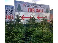Christmas trees Wigan