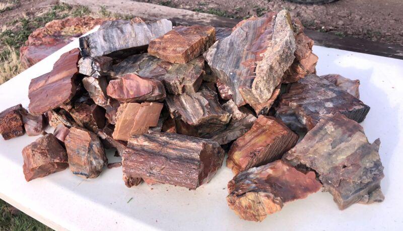 REILLY'S ROCKS: Arizona Petrified Wood, Wholesale Lot, 32 Lbs