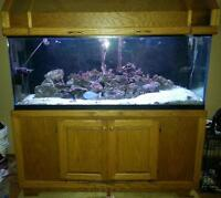 120 gal drilled aquarium with stand and canopy