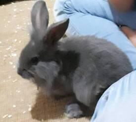 Baby rabbit ..female