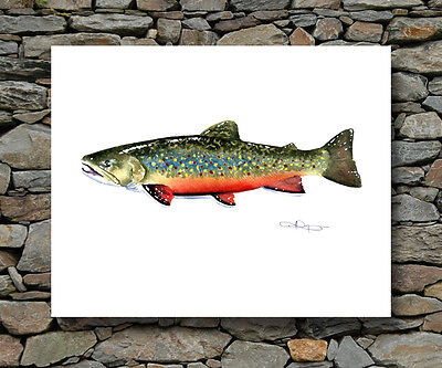BROOK TROUT Painting Fly Fishing Art Print by Artist DJR