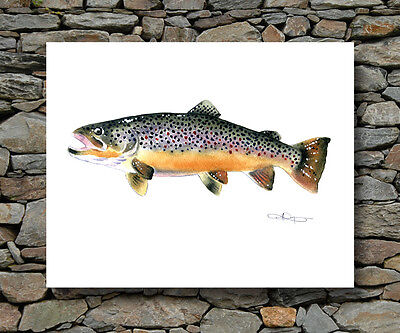 BROWN TROUT Painting Fly Fishing Art Print by Artist DJR