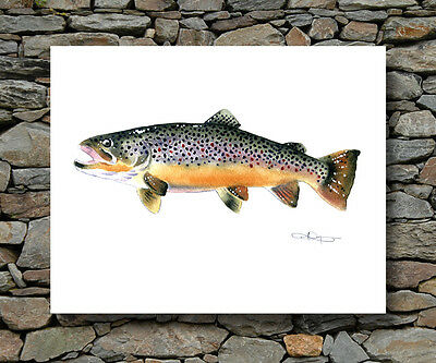 BROWN TROUT Painting Fly Fishing Wall Art Print Fisherman Retro Vintage Cabin (New Trout Fly Fishing Cabin)