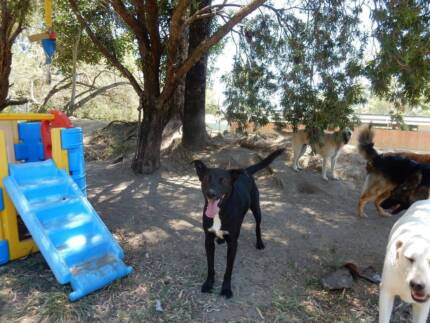 Socialisation Courses for Dogs in Logan